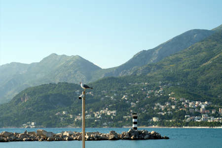 Seagull is sitting on a pole against the background of mountains covered with greenery, the sea and a lighthouse in the marina of a small Mediterranean coastal town