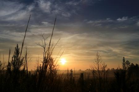 日の出の目覚め 写真素材