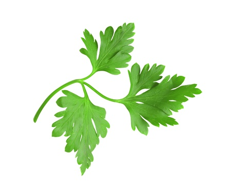 perejil: perejil de hierbas frescas verdes (hoja) aislada sobre fondo blanco