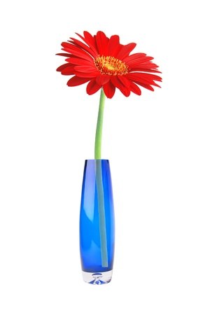 Single red gerbera flower in vase isolated on white