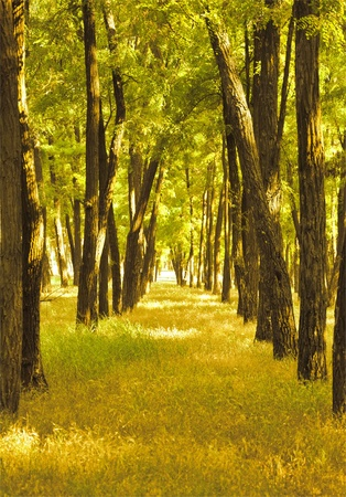 beautiful yellow autumn trees in the forest Stock Photo
