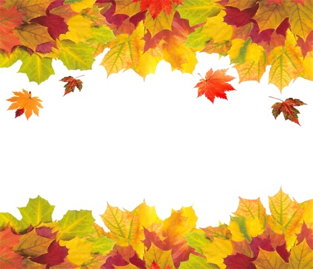 Autumn card of colorful leaves over white photo