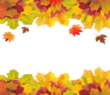 calendario octubre: Tarjeta de oto�o de coloridas hojas en blanco