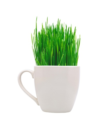 White cup with green grass isolated on white background