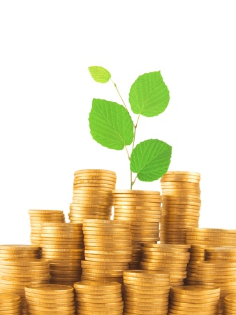 Coins and green plant isolated on white background