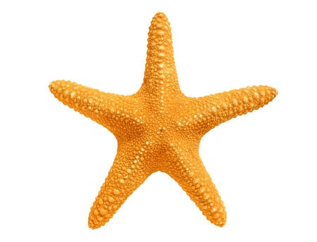 sea stars: big yellow sea-star isolated on white background