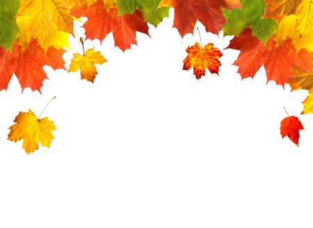 red maples: Autumn card of bright multicolor leaves