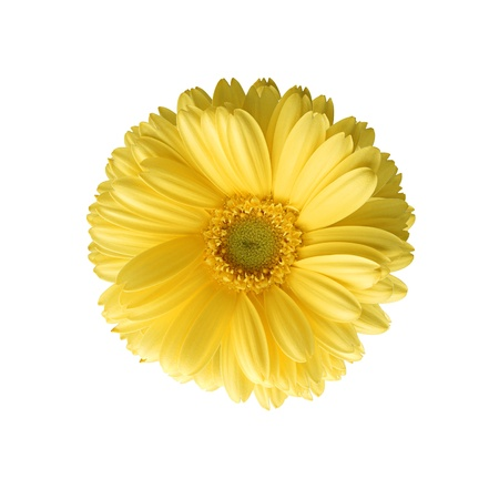 Yellow autumn chrysanthemum isolated on white Stock Photo - 11286554