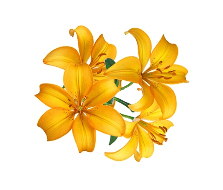 Beautiful yellow lily isolated on white Stock Photo