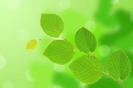 linden green leaves over nature background Stock Photo - 11966544