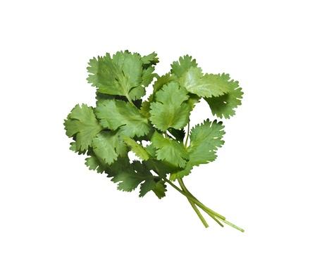 garnishing: fresh bunch of parsley isolated on white Stock Photo