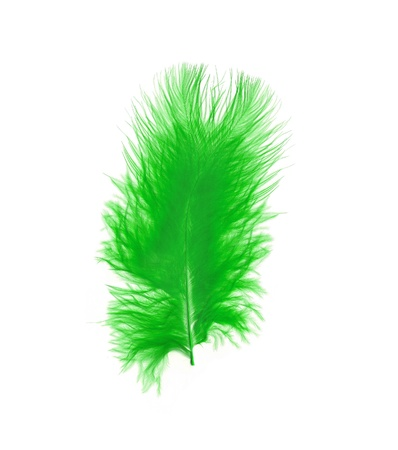 Green feather over white background Stock Photo - 13441947