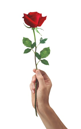 courtship: red rose flower in hand men isolated on a white background Stock Photo