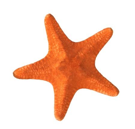 estrella de mar: estrellas de mar de color rojo sobre fondo blanco