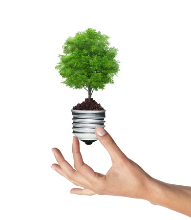 tree in a lightbulb in woman hand over white, green energy concept  Stock Photo