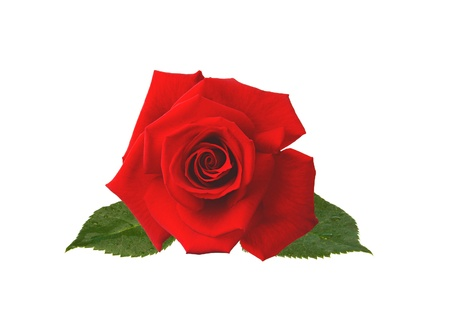 beautiful red rose isolated on white Stock Photo - 14068045