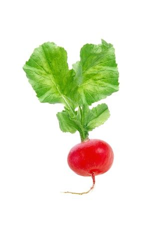 Fresh red radish isolated on white photo