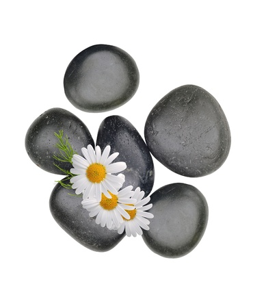 oriental medicine: Black spa stones with chamomiles isolated on white background