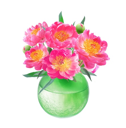 Peony Flowers Bouquet in Vase isolated on white background  photo