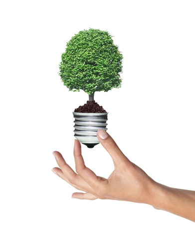 tree in a lightbulb in woman hand over white, green energy concept  photo
