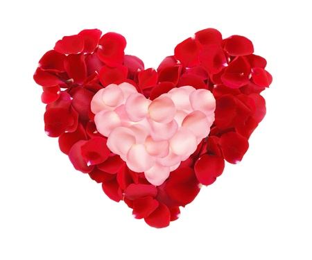 beautiful hearts of red and pink rose petals isolated on white photo