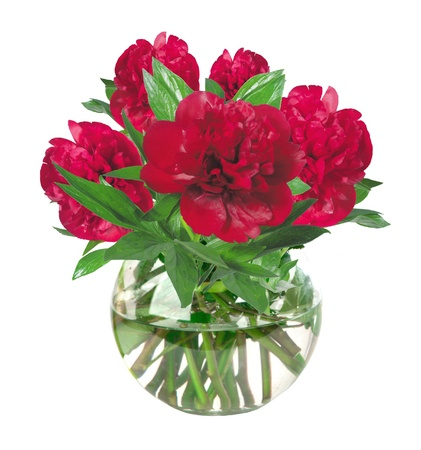 beautiful pink peony flowers in glass vase with bow isolated on white photo