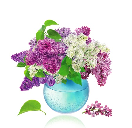 Beautiful Bunch of Lilac in the Vase photo