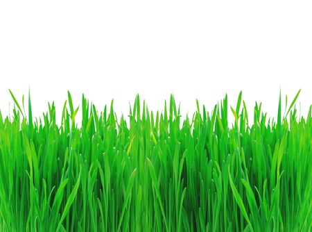 Green spring grass isolated on white background photo