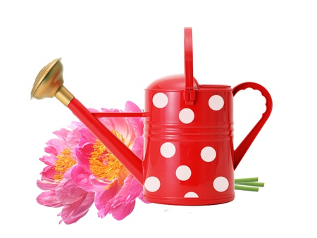 Red watering can and pink peony flowers isolated on white photo