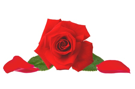 beautiful red rose and petals isolated on white background Stock Photo - 15151151