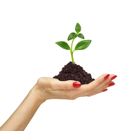 womans hand holding a plant growing out of the ground, on white background close-up