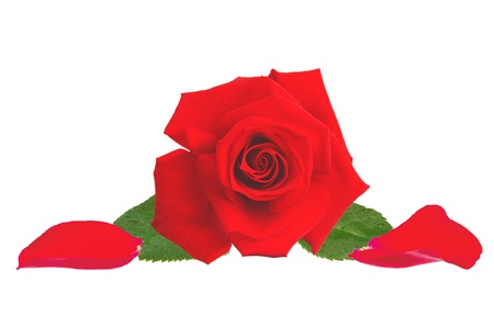 beautiful red rose and petals isolated on white background Stock Photo - 15898746
