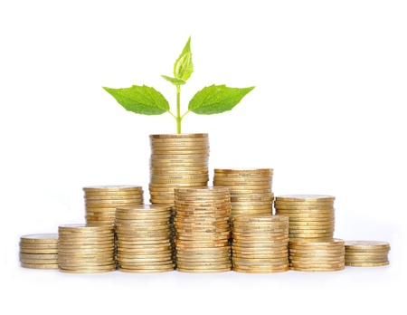 Many coins in column and green plant isolated on white background photo