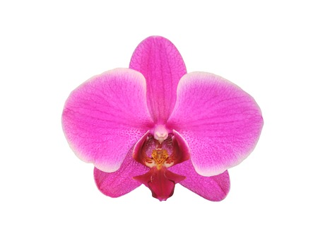 Beautiful flower Orchid, pink phalaenopsis close-up isolated on white background photo