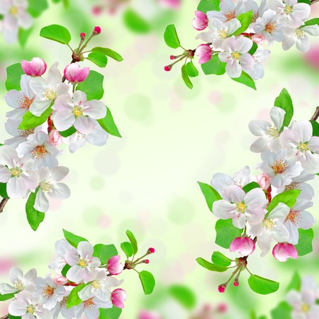 spring blossom on nature  photo