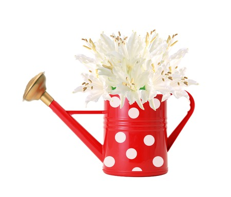 red polka dot watering can and white lilly isolated on white photo