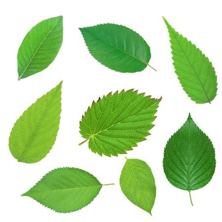 Ensemble de beau printemps des feuilles vertes isolé sur blanc Banque d'images - 27269934