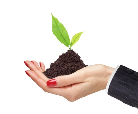 womans hands are holding green plant on white background close-up photo