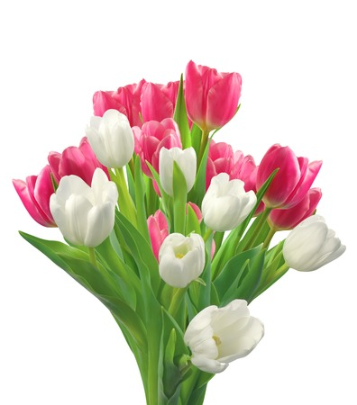 tulips isolated on white background: Bouquet of pink and white tulips isolated on white background Stock Photo