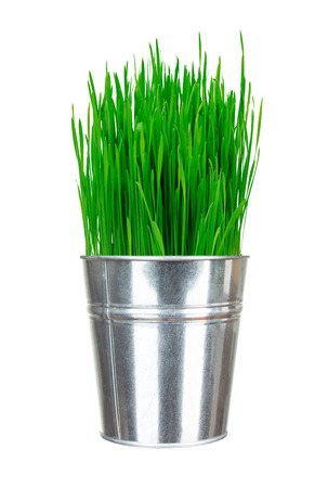 Fresh green grass in small metal bucket isolated on white photo