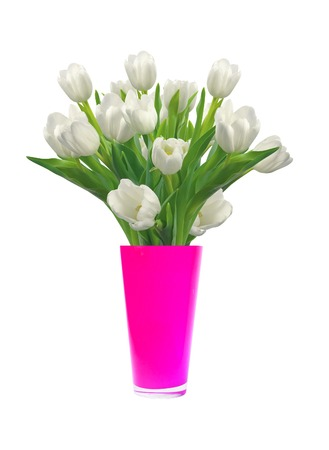 tulips isolated on white background: Bouquet of white tulips in pink vase isolated on white background