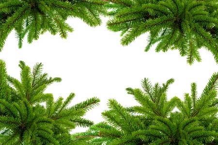 bushy: Green Christmas tree isolated on white Stock Photo