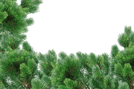 undecorated: Green Christmas tree isolated on white Stock Photo