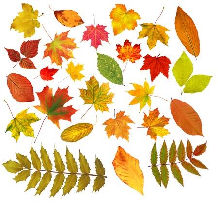 白い背景の上分離されたコレクションの美しいカラフルな紅葉