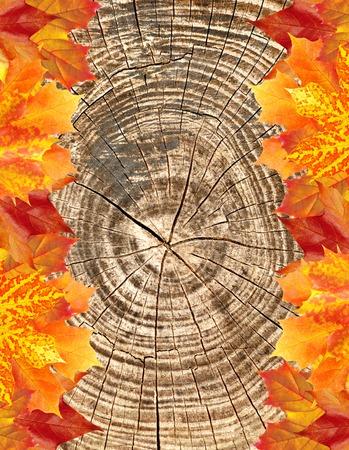 leaves frame: Autumn leaves frame over wooden texture