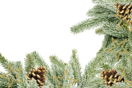 undecorated: Green Christmas tree with cones isolated on white Stock Photo