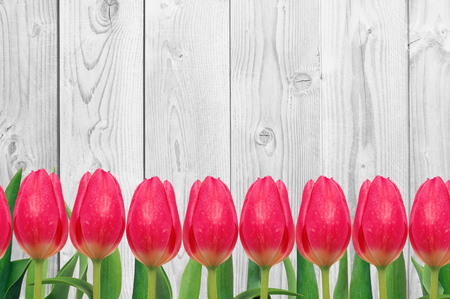 red tulip: Beautiful bright tulips on wooden background