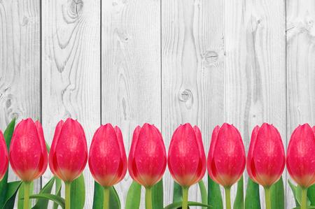 tulipan: Piękne jasne tulipany na tle drewnianych