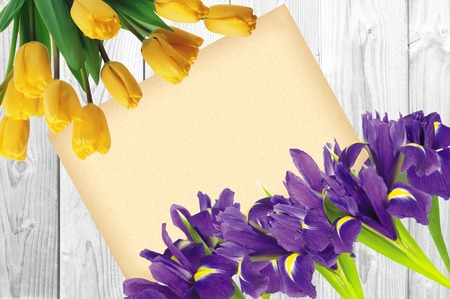 blueflag: Blueflag or iris flower and yellow tulips with greeting card on white wooden background Stock Photo