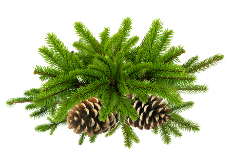 furtree: Branch of Green Christmas tree with cones isolated on white